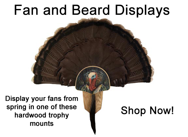 Fan and Beard Displays