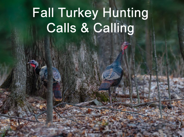 Fall Turkey Hunting Part 1